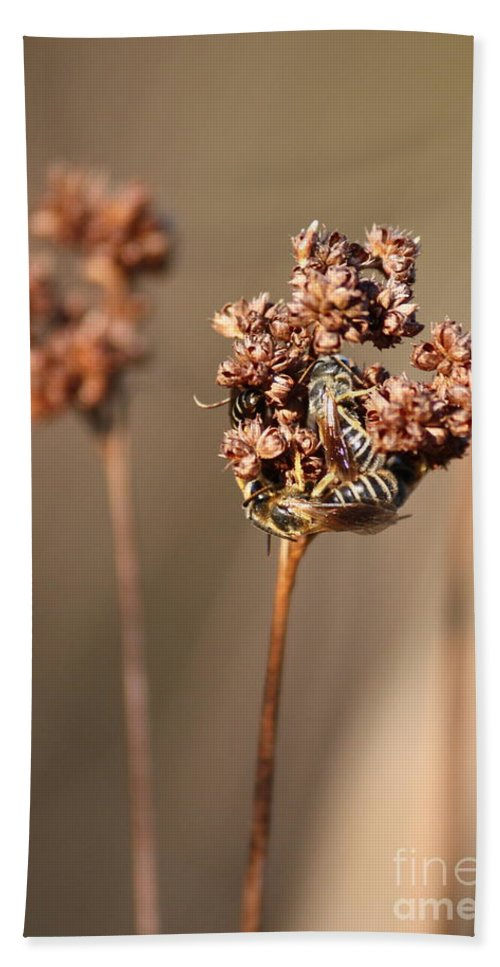 Bees Beach Towel featuring the photograph How Bees Keep Warm by Carol Groenen