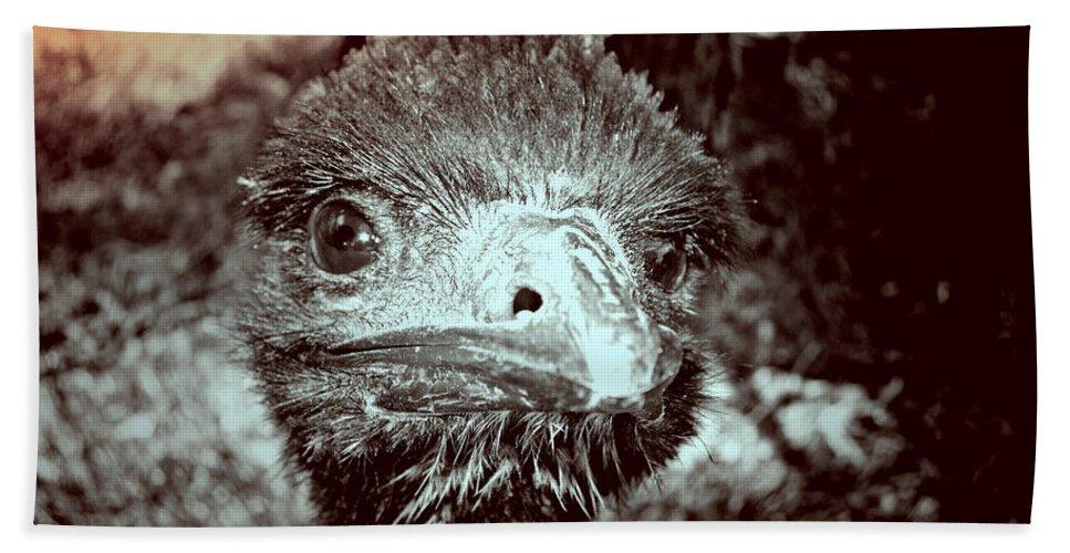 Emu Beach Towel featuring the photograph Howdy Doody by Douglas Barnard