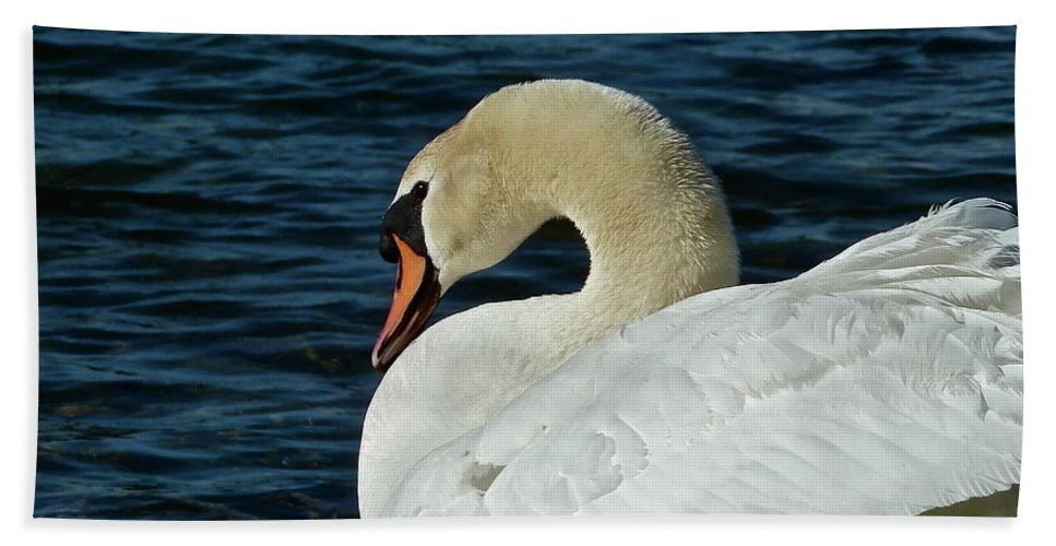 Swan Beach Towel featuring the photograph Humble Beauty by Diana Hatcher