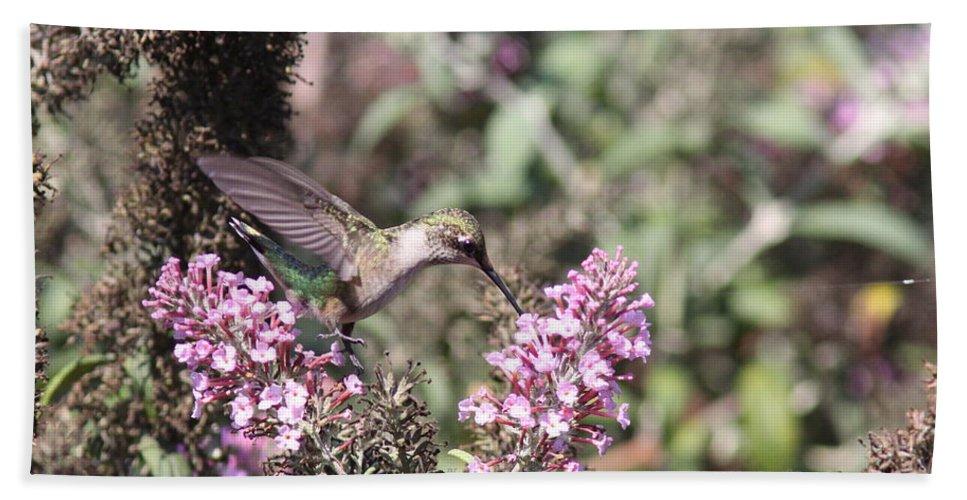 Hummingbird Beach Towel featuring the photograph Hummingbird - Feeding Little Ruby by Travis Truelove