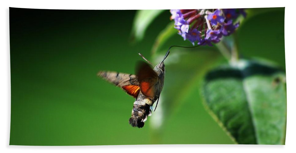 Hummingbird Hawk Moth Beach Towel featuring the photograph Hummingbird Hawk Moth - Five by P Donovan
