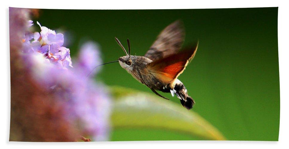 Hummingbird Hawk Moth Beach Towel featuring the photograph Hummingbird Hawk Moth - Four by P Donovan