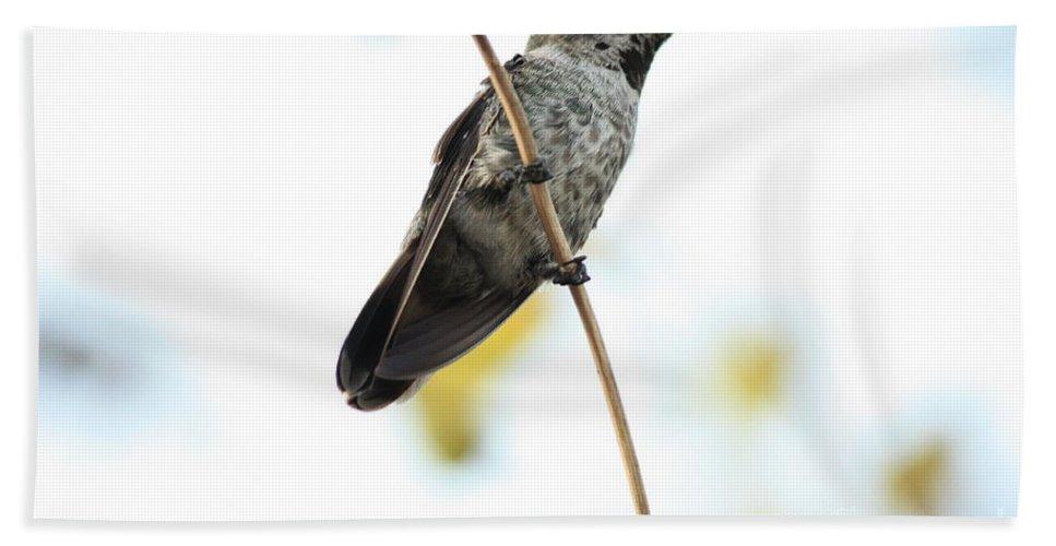 Hummingbird Beach Towel featuring the photograph Hummingbird Tongue by Carol Groenen
