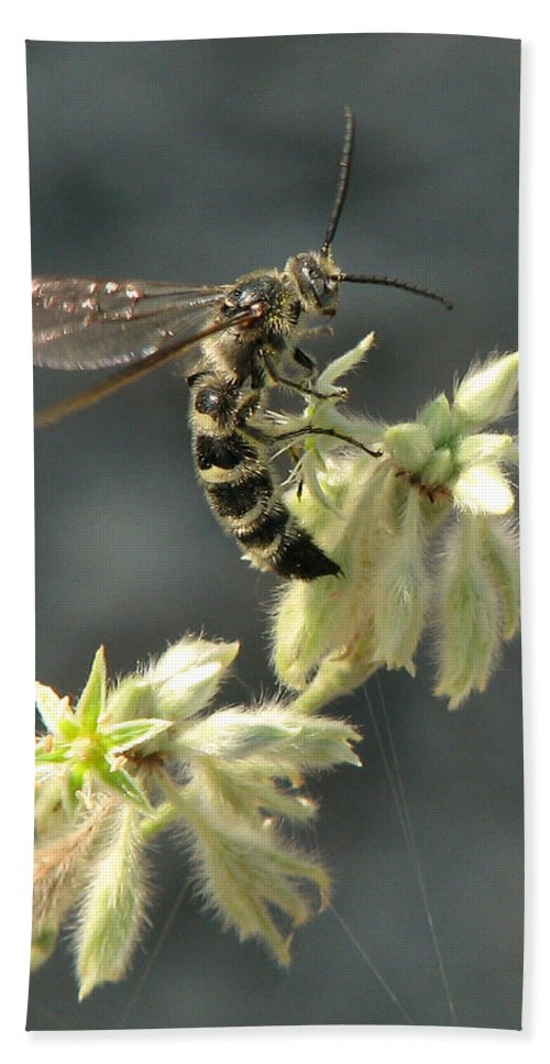 Nature Beach Towel featuring the photograph Hunter Wasp by Peg Urban