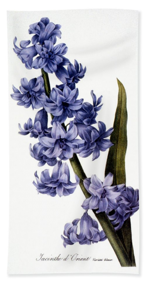 1833 Beach Towel featuring the photograph Hyacinth by Granger