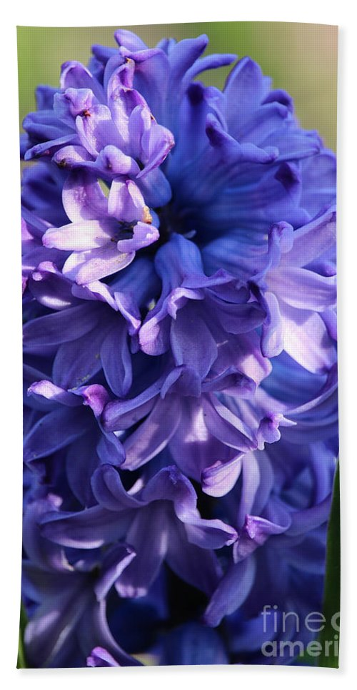 Flower Beach Towel featuring the photograph Hyacinth Highlights by Susan Herber