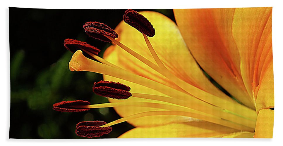 Flowers Beach Towel featuring the photograph Hybrid Lily by Rich Walter