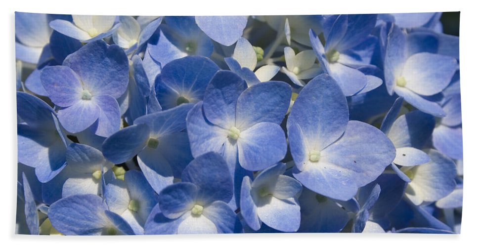 Flower Bloom Blue White Close Nature Sunny Summer Hydrangea Beach Sheet featuring the photograph Hydrangea by Andrei Shliakhau