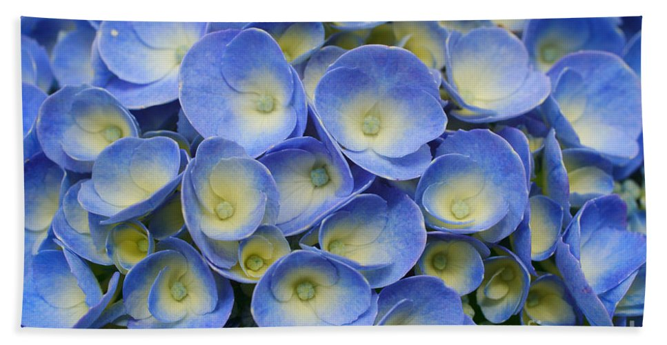 Flora Beach Sheet featuring the photograph Hydrangea Closeup by Gaspar Avila