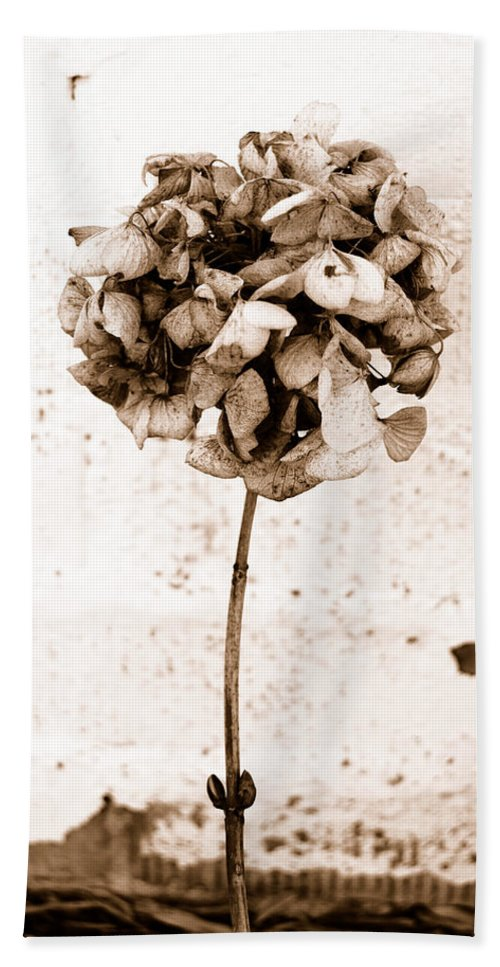 Sepia Beach Towel featuring the photograph Hydrangea Interest by Trish Hale