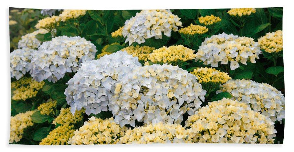 Hydrangea Beach Towel featuring the photograph Hydrangeas Blooming by Gaspar Avila