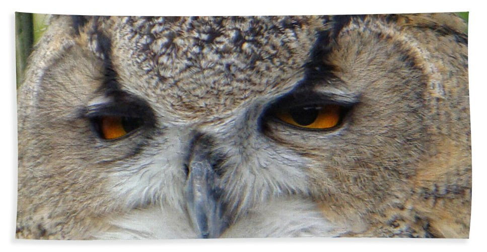 Owl Beach Towel featuring the photograph I Ate Too Much by Donna Blackhall