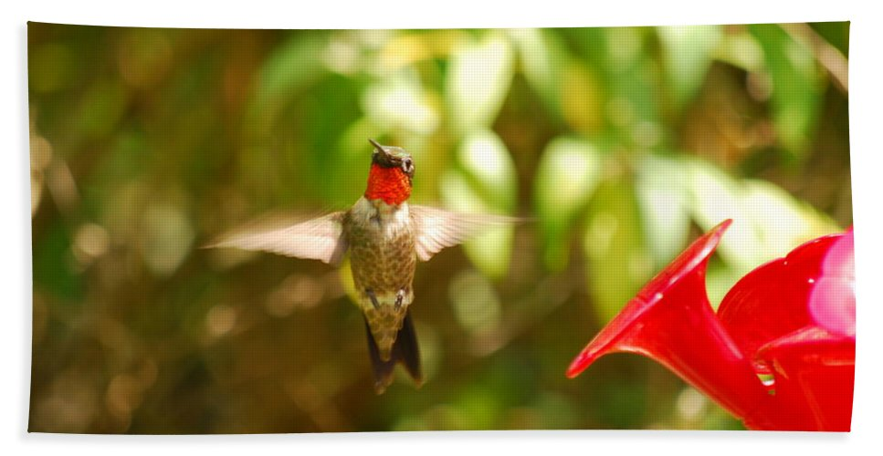 Hummingbird Beach Towel featuring the photograph I Can Fly by Lori Tambakis