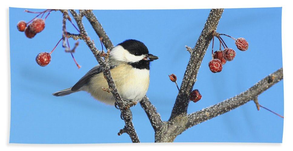 Bird Beach Towel featuring the photograph I Got My Seed by Deborah Benoit