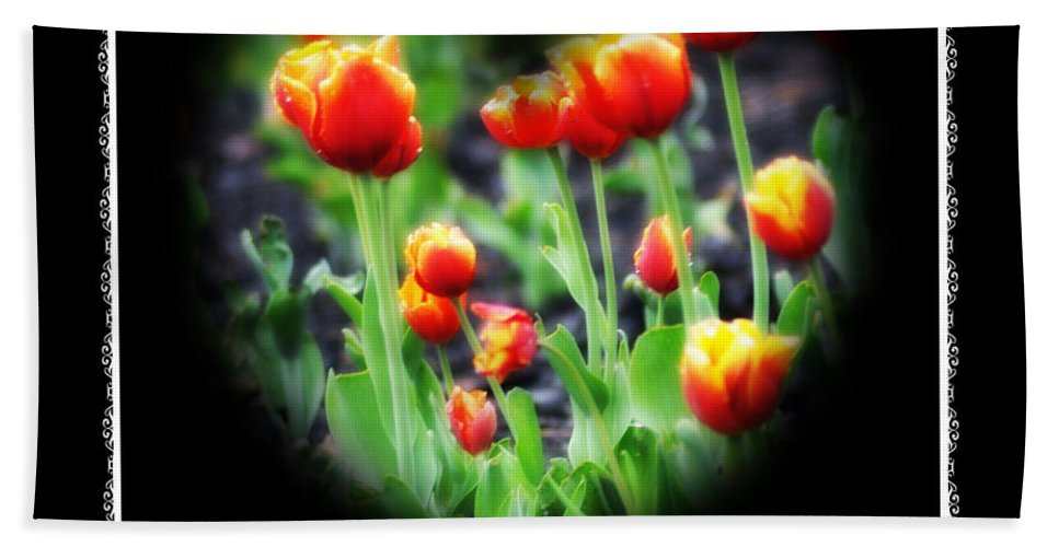Heart Beach Towel featuring the photograph I Heart Tulips - Black Background by Bill Cannon