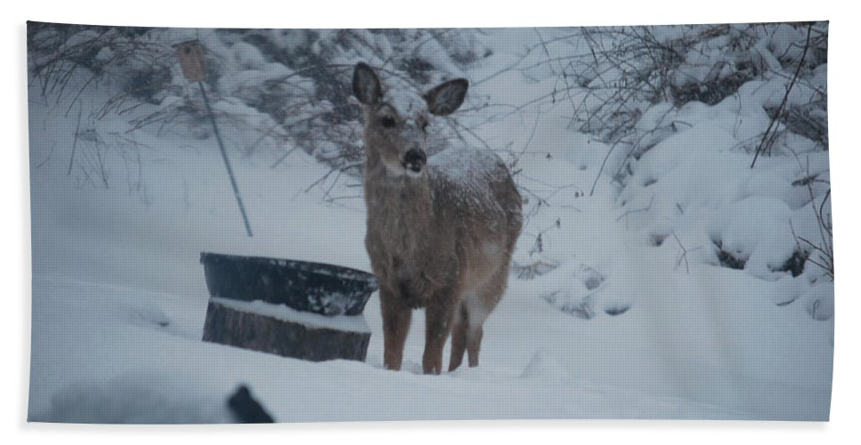 Deer Beach Towel featuring the photograph I Love Snow by Lori Tambakis