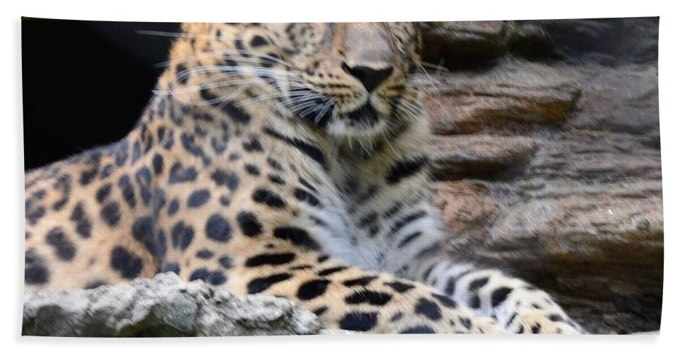 Animals Beach Towel featuring the photograph I See You by Charles HALL