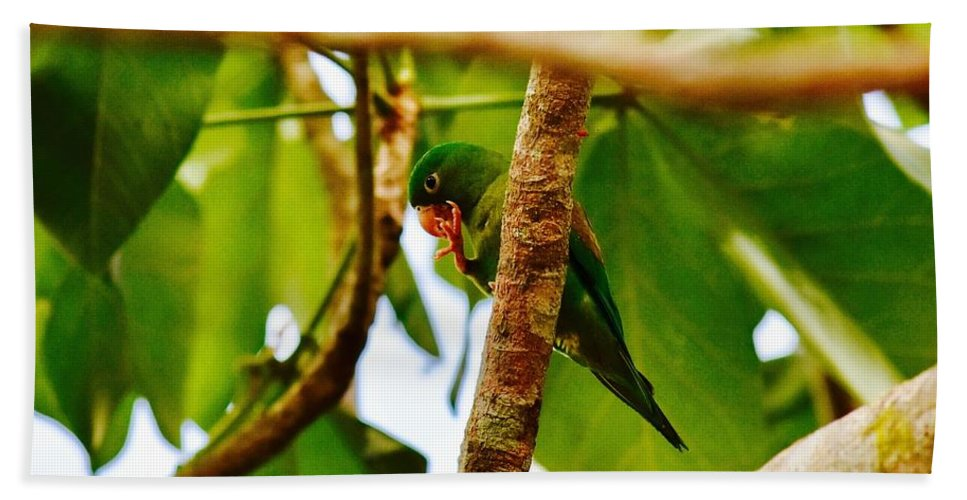 Green Parrot Beach Towel featuring the photograph I Spy by Danny Aab