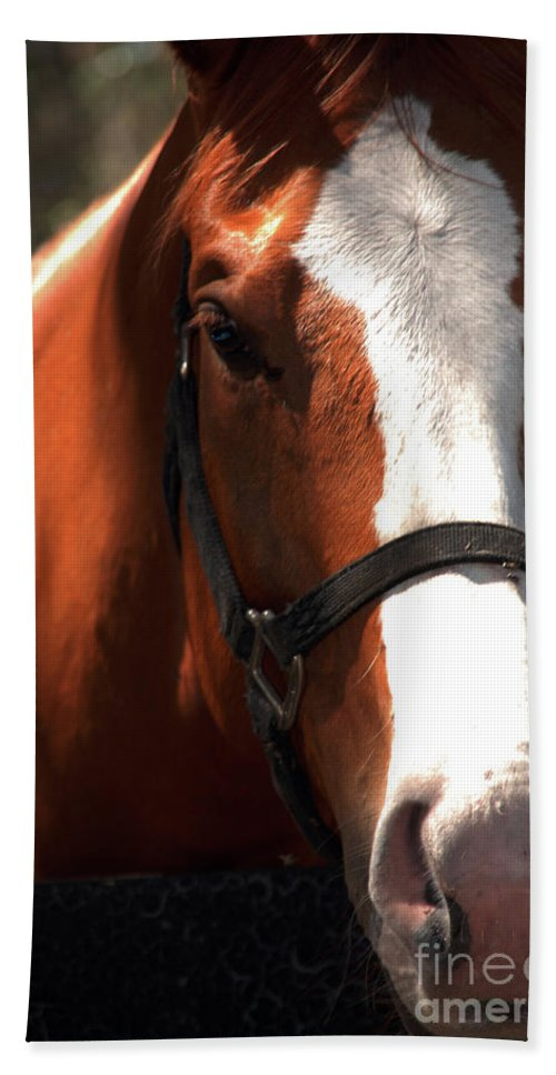 Horse Beach Towel featuring the photograph I Was Waiting For You by Susanne Van Hulst
