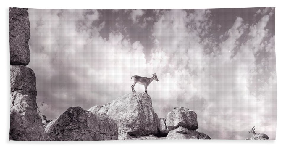 Ibex Beach Towel featuring the photograph Ibex -the Wild Mountain Goats In The El Torcal Mountains Spain by Mal Bray