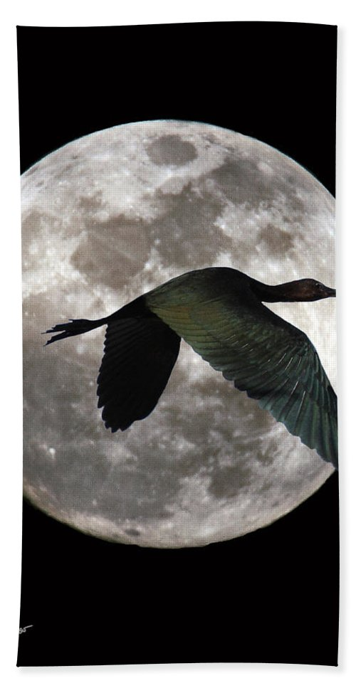 Digital Art Beach Towel featuring the photograph Ibis Moon by David Salter