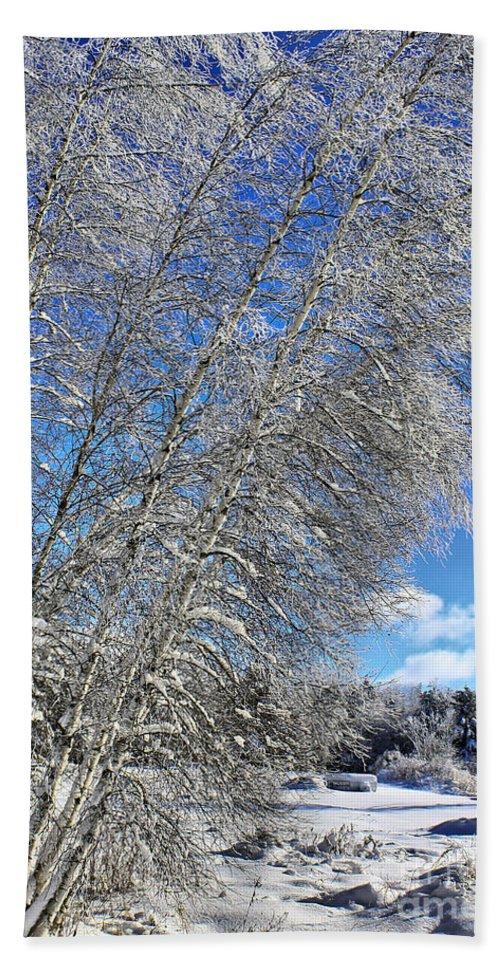 Snow Beach Towel featuring the photograph Ice Laden Birches by Deborah Benoit