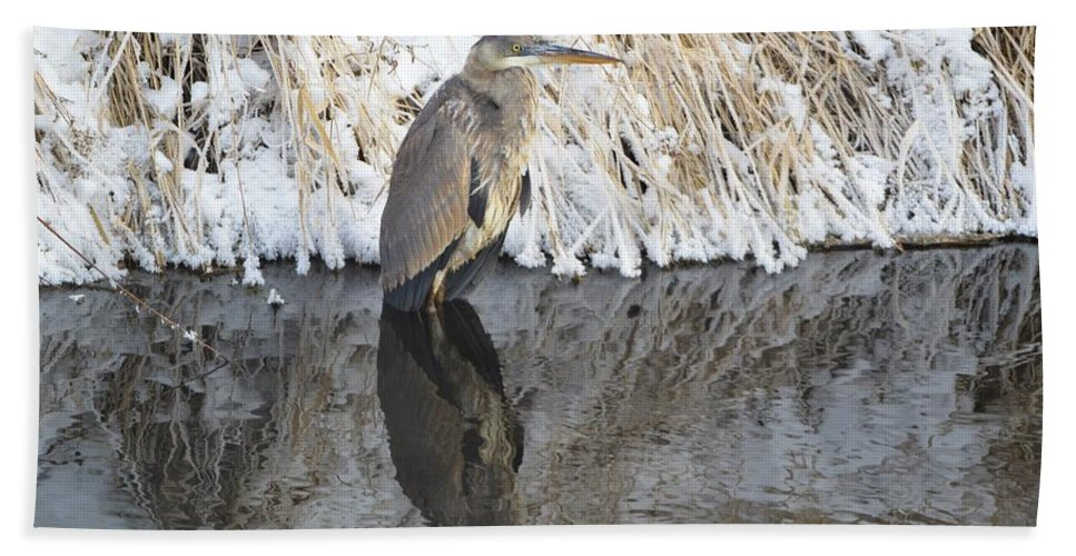 Winter Beach Towel featuring the photograph Iced Heron by Bonfire Photography