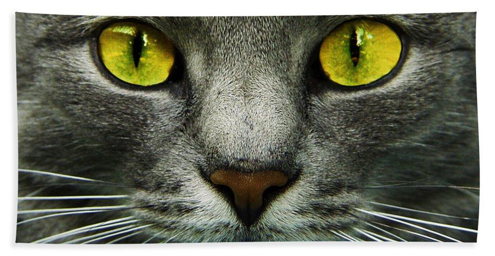 Cats Beach Sheet featuring the photograph I.c.u. by Joachim G Pinkawa