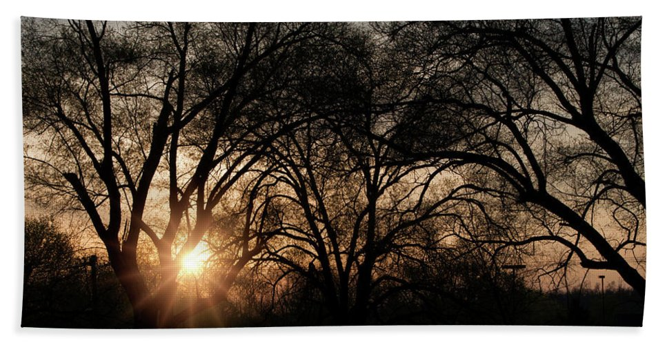 Landscape Beach Towel featuring the photograph Illuminating Through Trees by Megan Miller