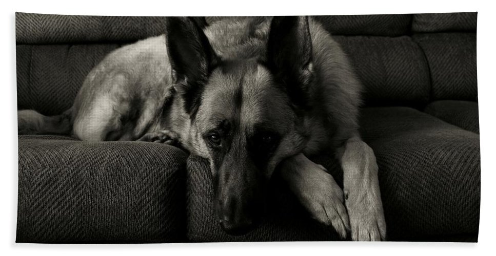 German Shepherd Dogs Beach Towel featuring the photograph I'm Waiting For You by Angie Tirado