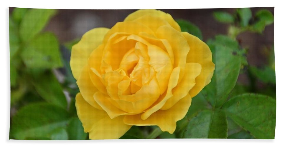 Rose Beach Towel featuring the photograph I'm Your Venus by Michiale Schneider