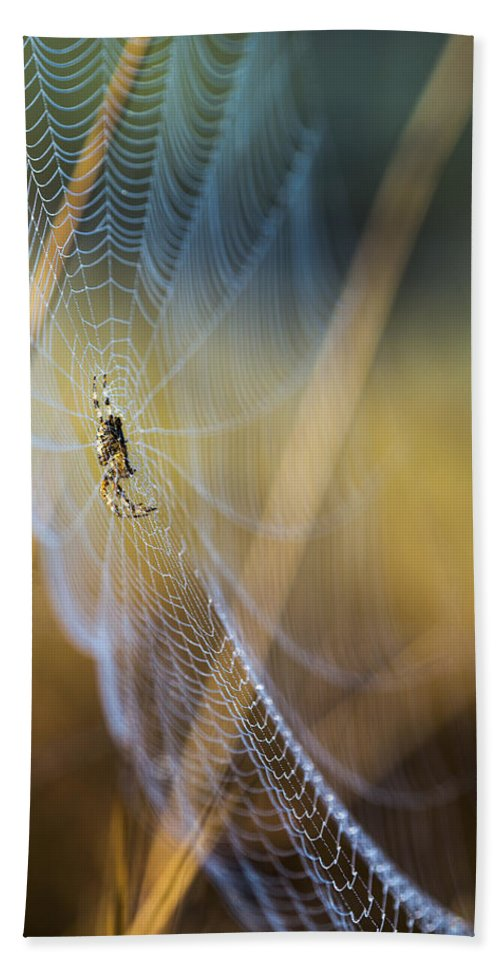 Arachnid Beach Towel featuring the photograph In Color by Robert Potts