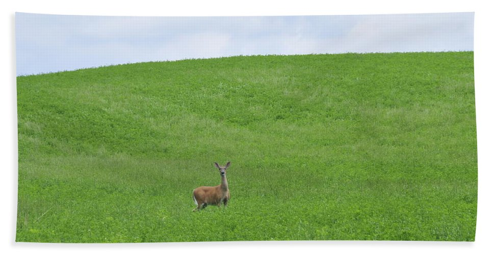 Deer Beach Towel featuring the photograph In Fields Of Green by David Arment