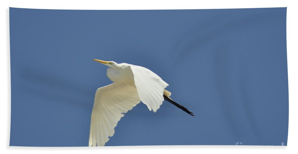 Clay Beach Towel featuring the photograph In Flight by Clayton Bruster