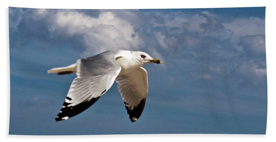 Bird Beach Towel featuring the photograph In Flight by Donna Walsh