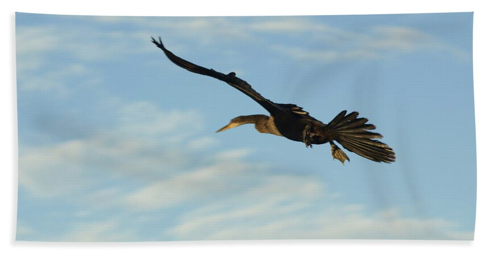 Birds Beach Towel featuring the photograph In Flight by Marty Koch