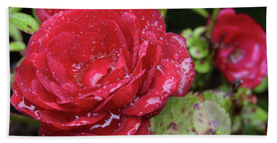 Roses Beach Towel featuring the photograph In Love With Rain by Kim Tran