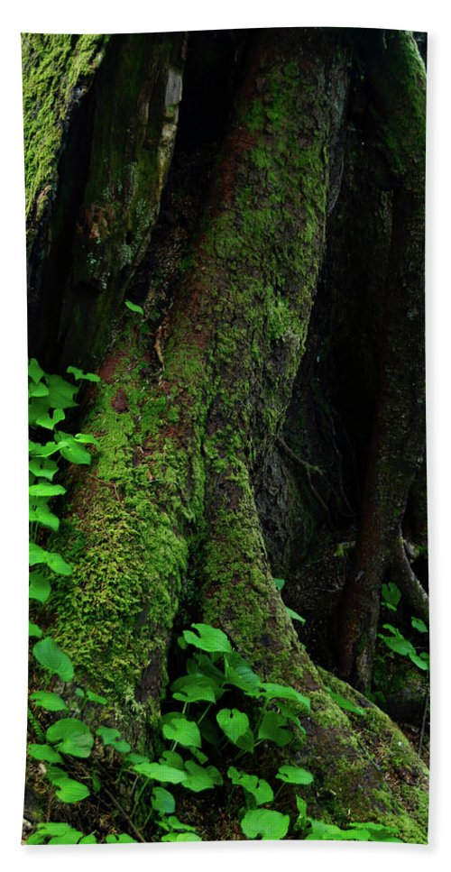Oregon Beach Towel featuring the photograph In The Crevice Of A Giant by Renee Hong