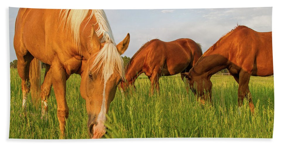 Quarter Horse Beach Towel featuring the photograph In The Grass by Alana Thrower