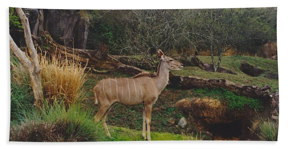 Scenery Beach Towel featuring the photograph In The Jungle by Michelle Powell