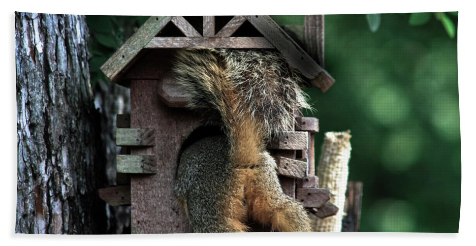 Squirrel Beach Towel featuring the photograph In The Nut House by Kim Henderson