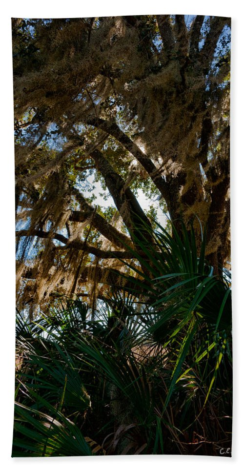 Botanical Beach Towel featuring the photograph In The Shade Of A Florida Oak by Christopher Holmes
