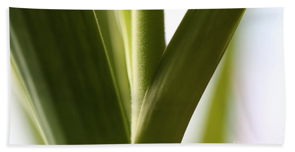 Leaves Beach Towel featuring the photograph In The Spotlight Of Support by Amanda Barcon