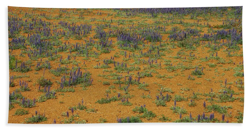 Flowers Beach Towel featuring the photograph Infinity by Donna Blackhall
