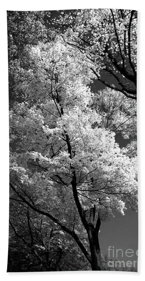 Tree Beach Towel featuring the photograph Infrared Tree Pic by Heiko Koehrer-Wagner
