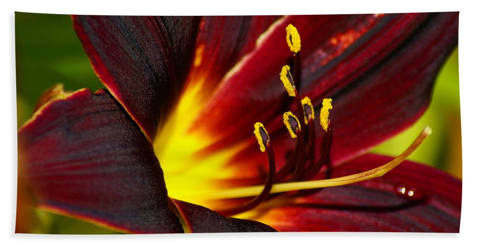Flowers Beach Towel featuring the photograph Inner Glow by Ben Upham III