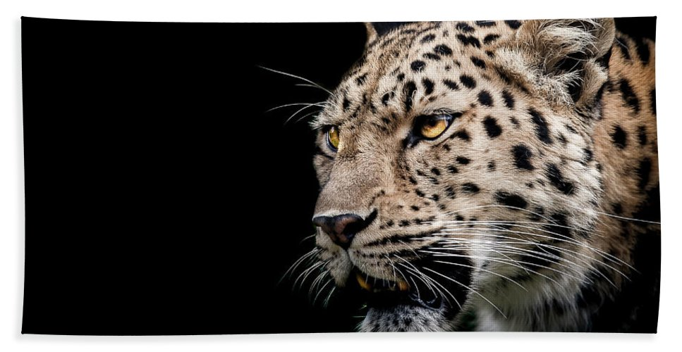 Leopard Beach Towel featuring the photograph Inner Strength by Paul Neville