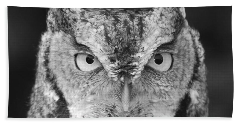 Black And White Beach Towel featuring the photograph Intense Stare by Richard Bryce and Family