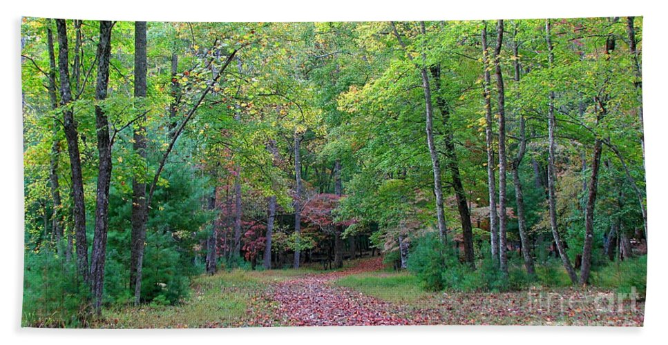 Landscape Beach Towel featuring the photograph Into The Forest by Todd Blanchard