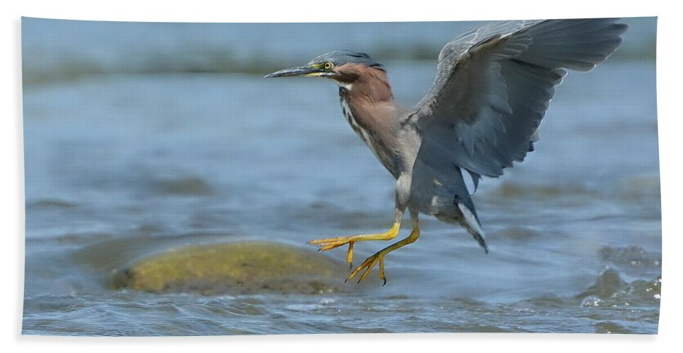 Green Heron Beach Towel featuring the photograph Into The Rapids by Fraida Gutovich